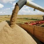Крымские власти и Сирия заключили договор о поставках сельхозпродукции в 2020 году
