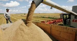 Россия после отмены пошлины уже поставила на экспорт 533 тыс. тонн пшеницы