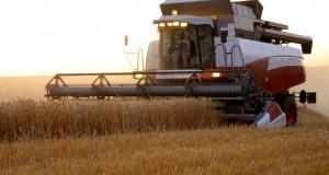 Эксперты повышают прогнозы урожая зерна в России в 2015 году