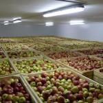 На Ставрополье появится еще одно мощное плодохранилище