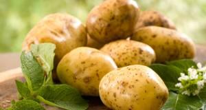 Ретейлеры ведут переговоры о поставках в сетевые магазины картофеля экономкласса