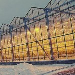 Площади тепличных хозяйств будут увеличены