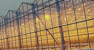 Ростовская область поборется за инвестиции в тепличные проекты