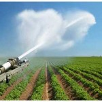 С начала года на Кубани собрали около 170 тысяч тонн овощей