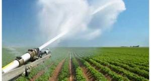 В минсельхозе Ставрополья обсудили проблемы и перспективы производства семян овощных культур в крае