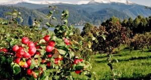 Дагестан вошел в тройку лидеров среди субъектов России по закладке новых садов