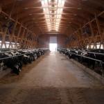 Россельхознадзор раскритиковал ветеринарные службы Кубани, Ставрополья и Волгоградской области