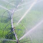 Эксперты оценили зависимость урожая в РФ от погоды и рассказали, как её снизить