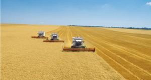 Российские аграрии стали снижать цены на зерно