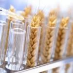 Американскому сельскому хозяйству нужна новая «зеленая революция»