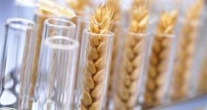 Инициатива ФАС вызвала подозрения аграриев и противников ГМО
