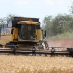 Экспортные цены на зерно в начале 2017 года могут достигнуть пика, после чего начнут снижаться