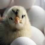 «Куриный Король» ищет пути повышения экспортного потенциала АПК