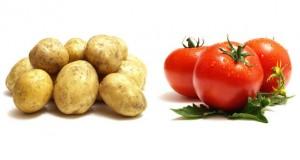 Агрофорум «Современная индустрия овощей и картофеля. Движение вверх» состоится в Подмосковье 16 августа