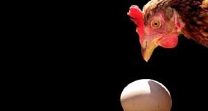 В российских магазинах появились упаковки яиц по 9 штук