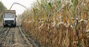 В Европе значительно выросли площади под кукурузой