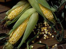 Семена кукурузы под урожай 2019 года для хозяйств Татарстана завезут из Краснодарского края