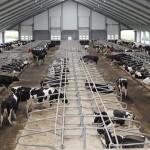 Агрохолдинг «ПРОМАГРО» (представлен в Черноземье) направил на выведение животных с совершенной генетикой еще 270 млн рублей