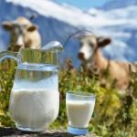 РФ для замещения импорта необходимо увеличить производство молока на 20-25 %