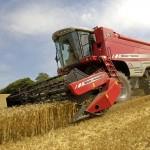 Российский зерновой рынок: на юге цены падают, в других регионах по-прежнему растут