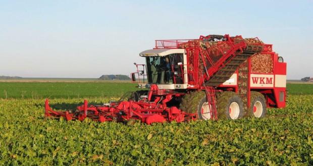 В Липецкой области собран первый миллион тонн сахарной свёклы