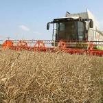Гордеев: предпосылок для подорожания продуктов, связанных с сельхозпроизводством, нет