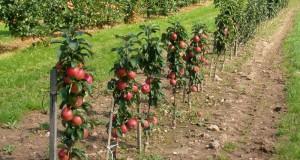 Сельхозпроизводителей Белгородской области обучат органическому сельскому хозяйству