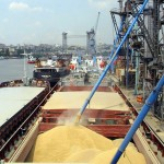 На 6 сентября экспорт зерна из РФ составил 11,279 млн тонн