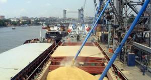 Из госфонда России на экспорт отправят полмиллиона тонн зерна