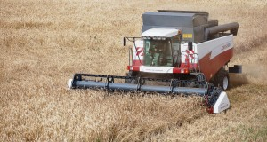 Алтайский край резко увеличивает экспорт зерна и продуктов его переработки