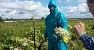 Как борщевик Сосновского из достижения агрохозяйственной науки стал мегапроблемой