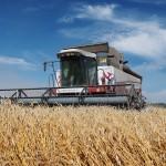 Урожайность зерновых в Ростовской области превысила прошлогодний показатель