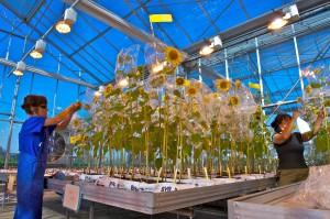 greenhouse_france_mondonville_selection