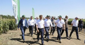 На Кубани на поддержку элитного семеноводства дополнительно направят 40 млн рублей