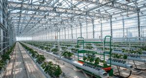 В Тамбовской области планируется открыть новый тепличный комплекс