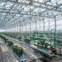 Bayer запускает производство органических семян овощных культур, расширяя доступ к рынку сертифицированной органической продукции
