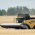 Росстат будет составлять балансы по пяти основным зерновым культурам