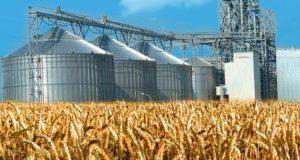 Лабораторные приборы ERKAYA – инструмент максимальной точности  при анализе зерна