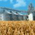 Оценивать качество зерна будут по-новому