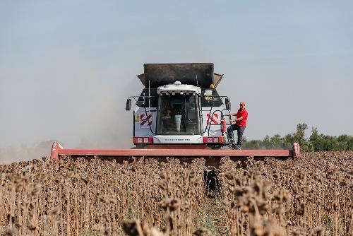 Россия соберет в этом году рекордный урожай масличных культур – эксперты