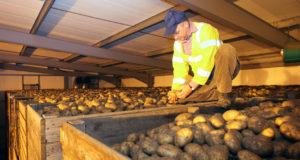 Прогрессивные технологии хранения картофеля и лука
