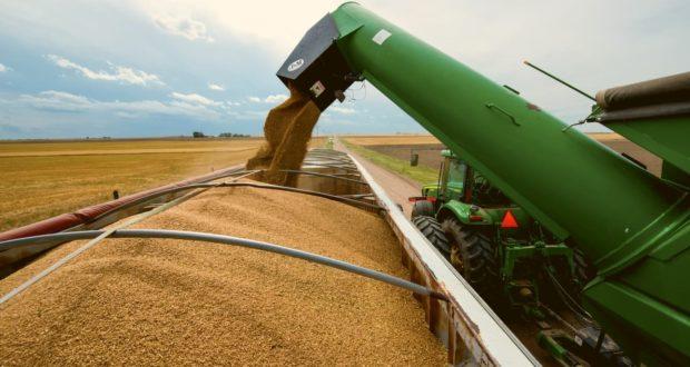 Минсельхоз ожидает  стабилизации цен на основные зерновые культуры