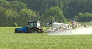 Что необходимо предпринять, чтобы повысить посевные  качества зерна?