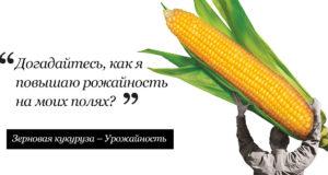 25 февраля 2021 г. Секреты богатого урожая кукурузы