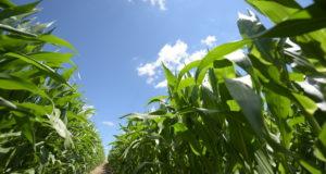 Компания LIMAGRAIN разработала инновационную технологию по эффективному управлению засухой HYDRANEO